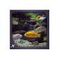 Chichild Fish Aquarium (App)